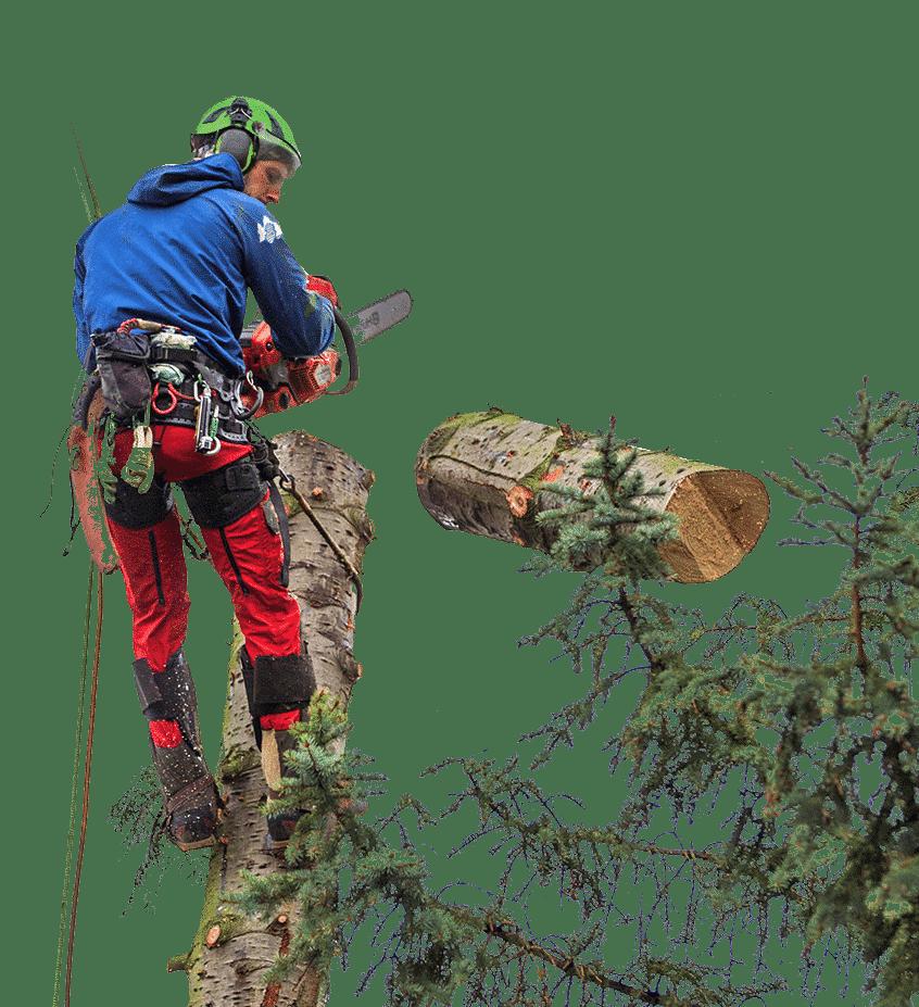 Baumfällung in der Stadt Kassel
